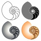 foto of fibonacci  - Vector illustration of a nautilus - JPG