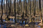 stock photo of groundwater  - Landscape of flooded spring forest under sunlight