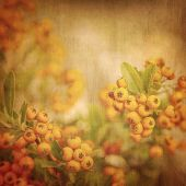 Rowan berry grunge background, old rustic natural backdrop, many little orange berry, dirty surface,