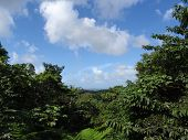 Trees, Hills, And Mountains Leading To The Sea Landscape In El Yunque