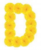 Letter D Made From Dandelions