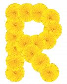 Letter R Made From Dandelions