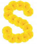 Letter S Made From Dandelions