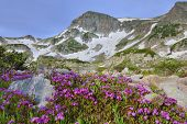 Wild Flowers At High Altitude Alpine Tundra And A Mountain Lake In Colorado During Summer