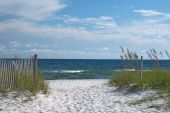 stock photo of sea oats  - A view of the Florida gulf coast with sea oats in the foreground - JPG