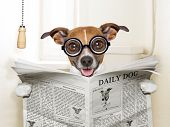 image of peeing  - crazy silly dog sitting on toilet and reading magazine - JPG