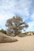 Dry Stream Bed Joshua Tree National Park California