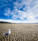 Low Tide At White Rock Beach, British Columbia