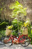 Red Bicycle Decorated With Plants