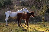 stock photo of great horse  - Two horses grazing in the field of the Altesina mountain