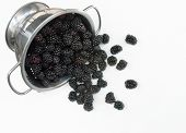 Colander with Spilled Blackberries