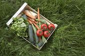 Closeup elevated view of crate of fresh vegetables on grass
