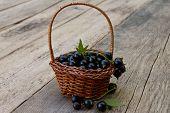 black currant in a basket closeup