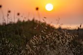 Grass On Sunset Background