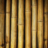 The Old Yellow Bamboo Fence Background Texture