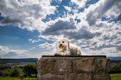 Dog On A Pedestal