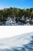 Winter/spring Forest With Ornament On Frozen Lake. Outdoors.