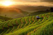Landscape Of Rice Terraces