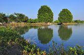 Reflection Tree Landscape
