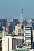 Tokyo cityscape and tokyo sky tree at daytime
