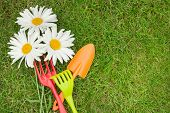 Garden tools and chamomile flowers over green grass with copy space