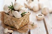 foto of crimini mushroom  - Fresh Champignons In Basket With Rossemary Leaves - JPG