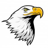 stock photo of eagles  - Stylized illustration of bald eagle head - JPG