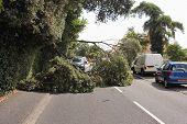 A fallen tree in high winds