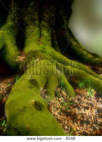 Where Elves Live poster