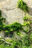 image of english ivy  - Architecture detail - JPG