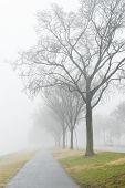 Hiking pat in fog