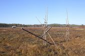 image of marshlands  - View of a marshland in autumn - JPG
