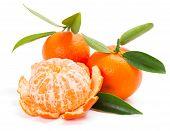 Tangerine Or Mandarin Fruit With Leaves
