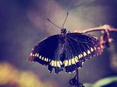photo of beautiful butterfly on wild flower toned with a retro vintage instagram filter effect