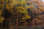 Fall In Oak Grove