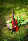 Violin on a grass and green leaves around