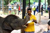 Baby elephants are fed milk