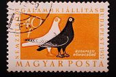 Hungary - Circa 1957: Postage Stamp Printed In Budapest Pokazyaaet Image Of Two Doves Black And Whit