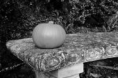 Small Gourd On A Stone Bench