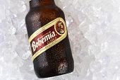 Bohemia Beer On Ice Closeup