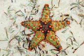 Colorful starfish on wet sand, Zanzibar island