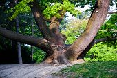 Stem Of Oak Trees In Fascinating Light In A Park In Vienna