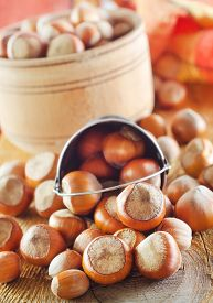 image of cobnuts  - hazelnuts on the wooden  table - JPG