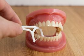 picture of false teeth  - Man cleaning a pair of false teeth with dental floss demonstrating how to clean between the teeth over a wooden background - JPG