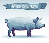 image of pig  - isolated blue vector illustration of watercolor pig - JPG