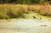 pic of swamps  - swamp landscape bog forest with standing water - JPG