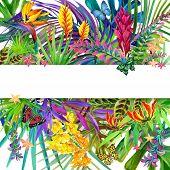 pic of jungle flowers  - Tropical leaves - JPG