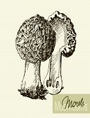pic of morel mushroom  - Set of linear drawing mushrooms - JPG