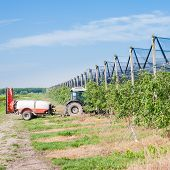 stock photo of pesticide  - Agricultural work - JPG