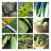 image of stall  - Raw vegetable and market stalls on a collage  - JPG
